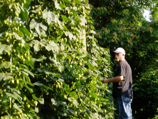 Hop_picking__09_005